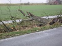 Sturmschäden durch Orkan Xaver