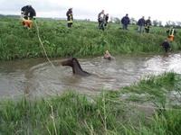 Die Tiere schwammen in Panik durch den Bullenfluss