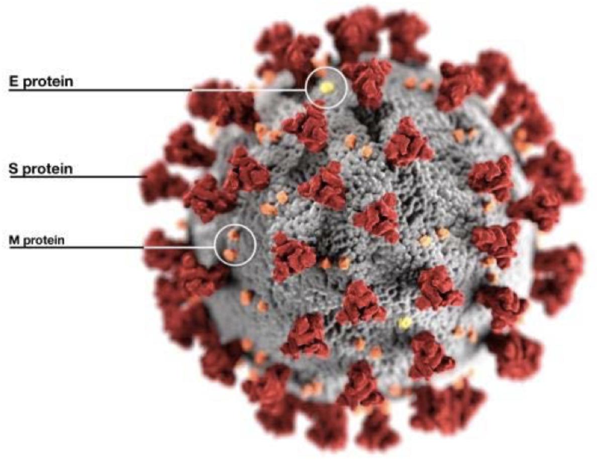 Informationen zu SARS-CoV-2
